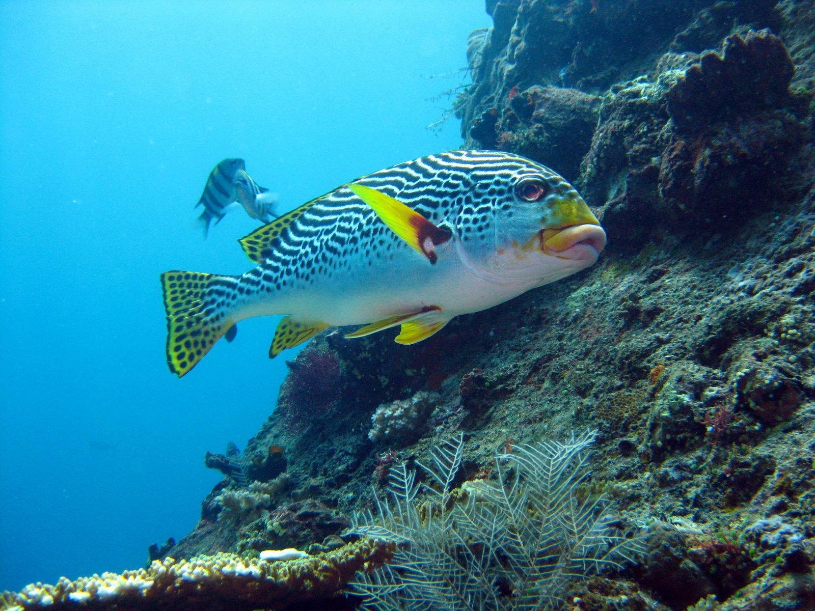 bali best scuba diving sites