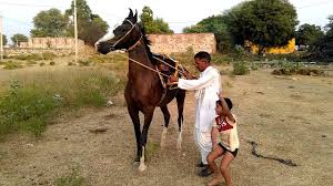 सपने में घोड़ी देखना