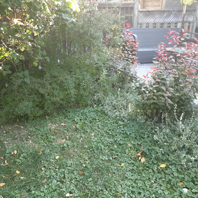 Toronto Dufferin Grove New Garden Renovation Before by Paul Jung Gardening Services--a Toronto Organic Gardener for Hire