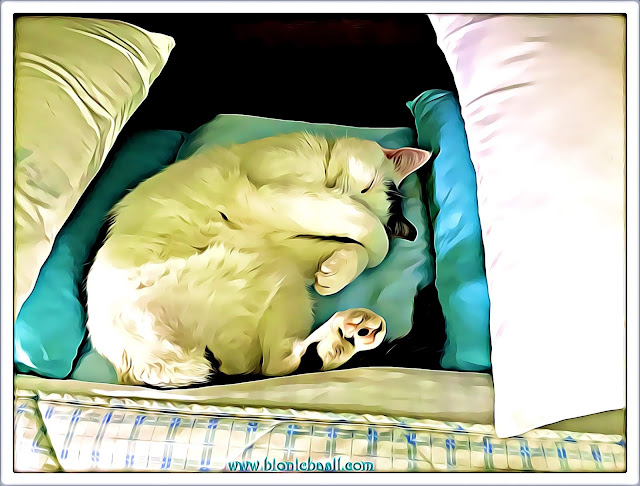 Smooch's Big Sunday Sleep-In ©BionicBasil® Caturday Art