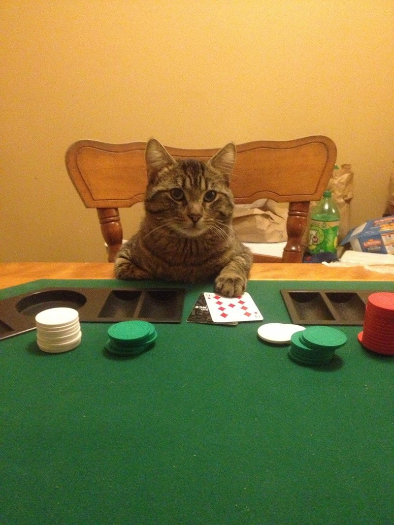animals playing poker photo