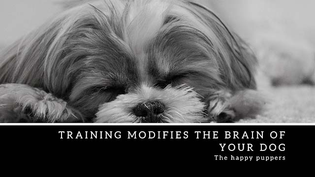 Training modifies the brain of your dog