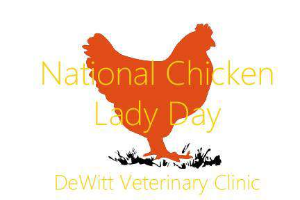 National Chicken Lady Day Wishes Images