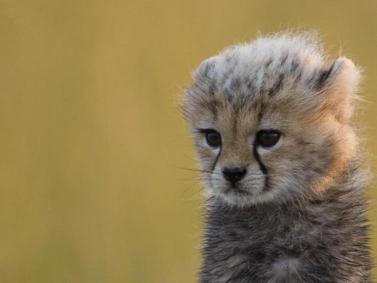 Rankmaniac 2012: Baby Animals