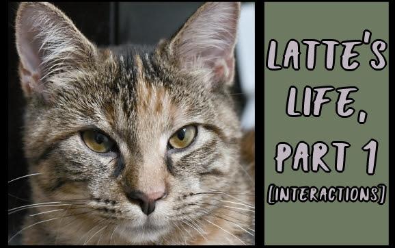 Latte's life, part 1 [interactions]