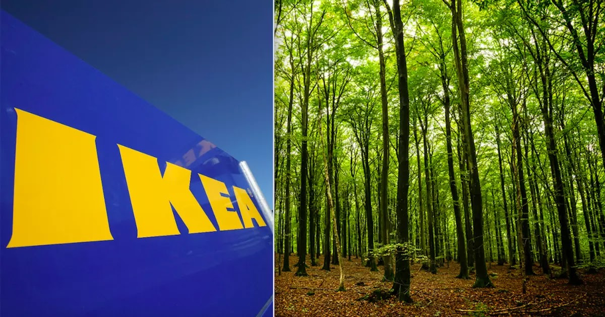 IKEA Buys 11,000 Acres Of Forest In The State Of Georgia And Vows To Protect The 350 Animal Species That Live There
