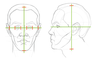 Head proportions: Placing and sizing the eyes, front view and side view