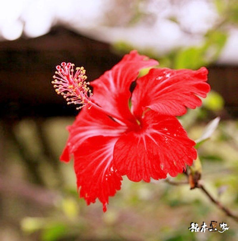 江家果園|採柿趣