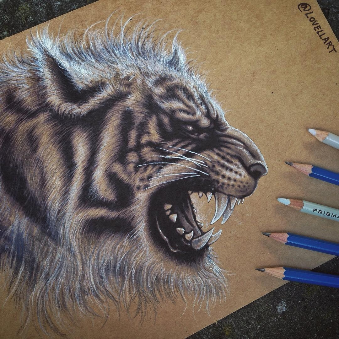 13-Tiger-Christopher-Lovell-Character-Drawings-Portraits-and-Monsters-www-designstack-co