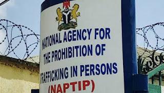 NAPTIP Apprehended Lebanese Human Trafficker