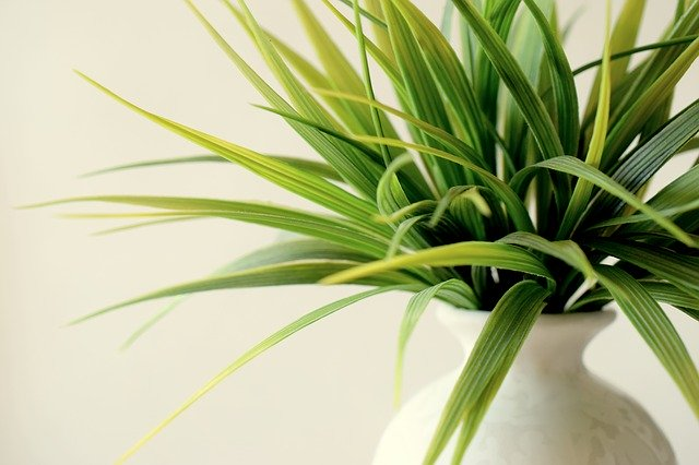 Steps to begin indoor plant business