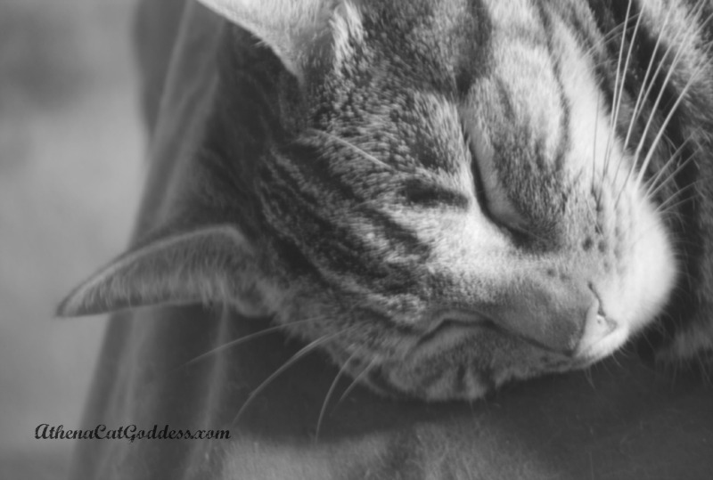 Sleeping Cat in Black and White