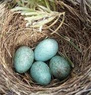 telur kenari
