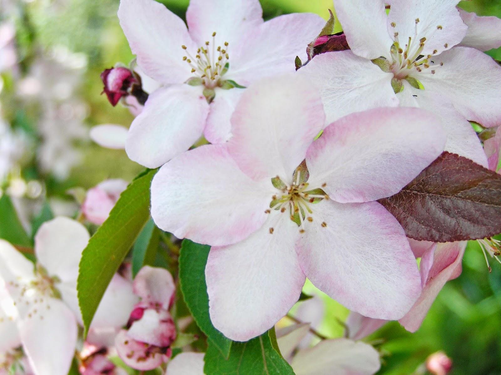 5 powodów dla których wiosna to moja ukochana pora roku