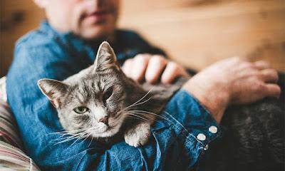¿Por qué los gatos se apegan a una sola persona?