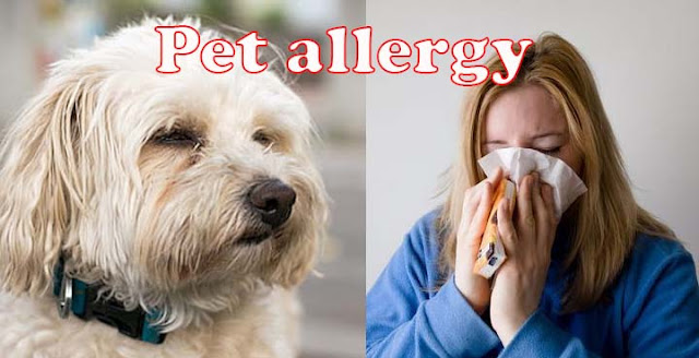 Pet allergy - Symptoms and causes