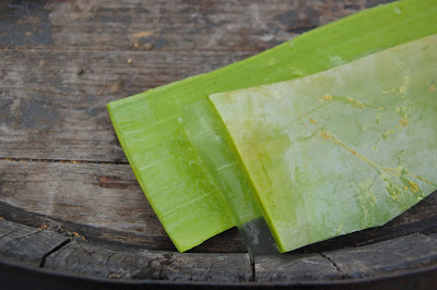 aloe vera uses | রূপচর্চায় এলোভেরার গুনাগুন ।