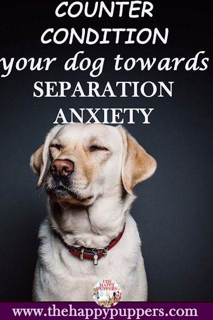 How to counter condition your dog towards separation anxiety?
