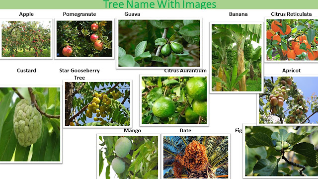 Tree Names with Picture