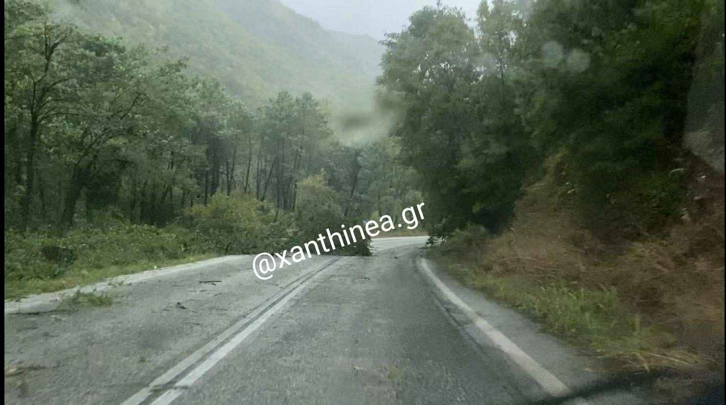 Πτώσεις δέντρων στην ορεινή Ξάνθη από κεραυνό - ΒΙΝΤΕΟ