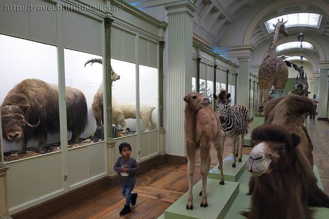 Tournai Things to do Natural History Museum