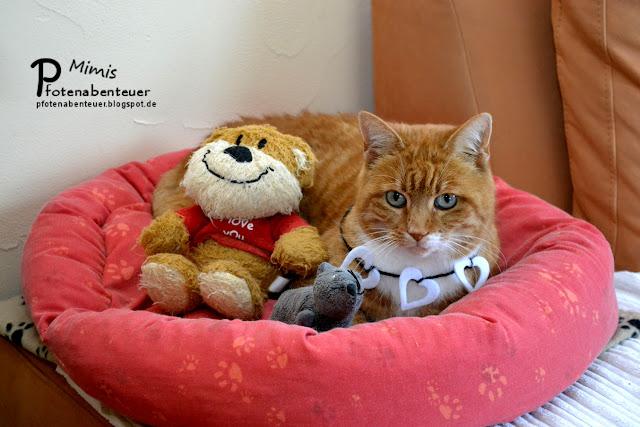 Katze Mimi hat am Valentinstag eine Herz-Kette