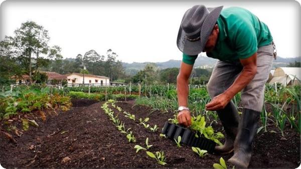 Bono Rural 760 soles: Consulta si eres beneficiario