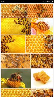 Fakta Lebah madu yang mungkin tidak kamu ketahui sebelumnya