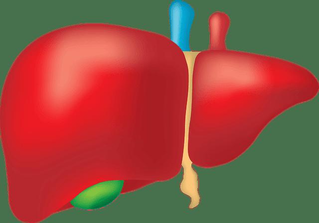 الكبد الدهني اسبابه اعراضه علاحه