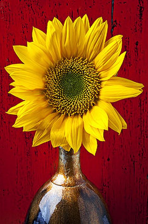 Fotografias De Stock Samiramay: Imágenes Arte Pinturas: Fotos De Flores Grandes En