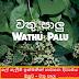 ලේ ගැලීම් ඉක්මනින් නවතන දිව්යමය ඔසුව - වතු පාලු (Wathu Palu)