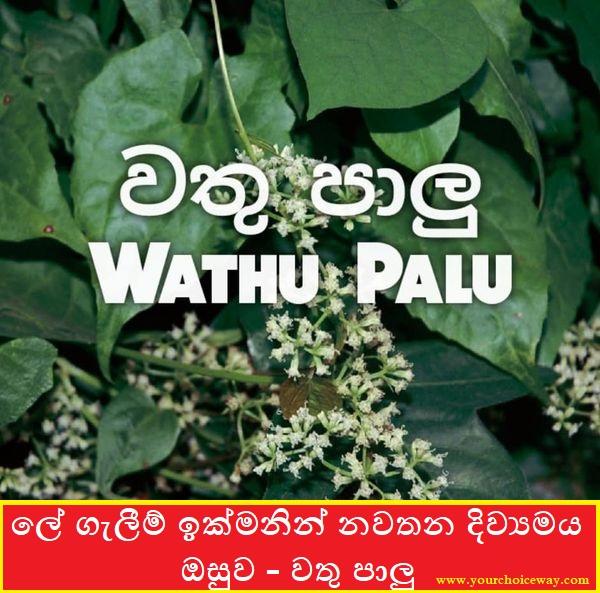 ලේ ගැලීම් ඉක්මනින් නවතන දිව්යමය ඔසුව - වතු පාලු (Wathu Palu) - Your Choice Way
