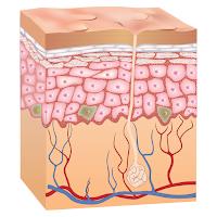 Skin (kulit)