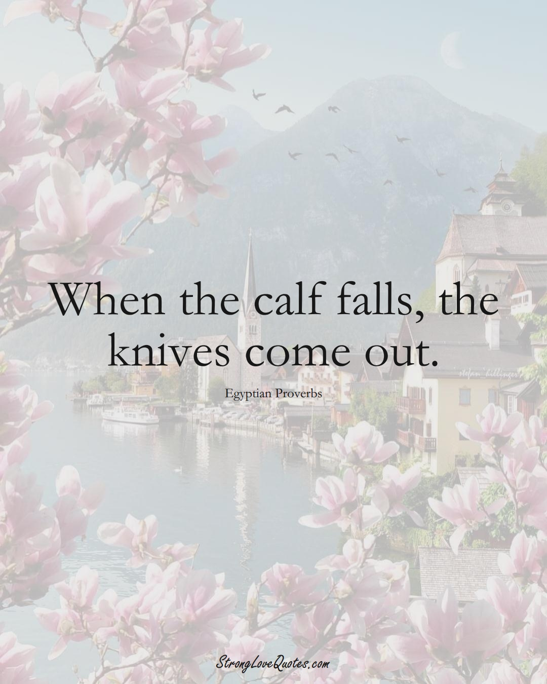 When the calf falls, the knives come out. (Egyptian Sayings);  #MiddleEasternSayings