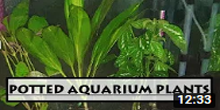 How To Grow Potted Plants in Aquarium