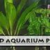 Aquascaping and Aquatic Plants