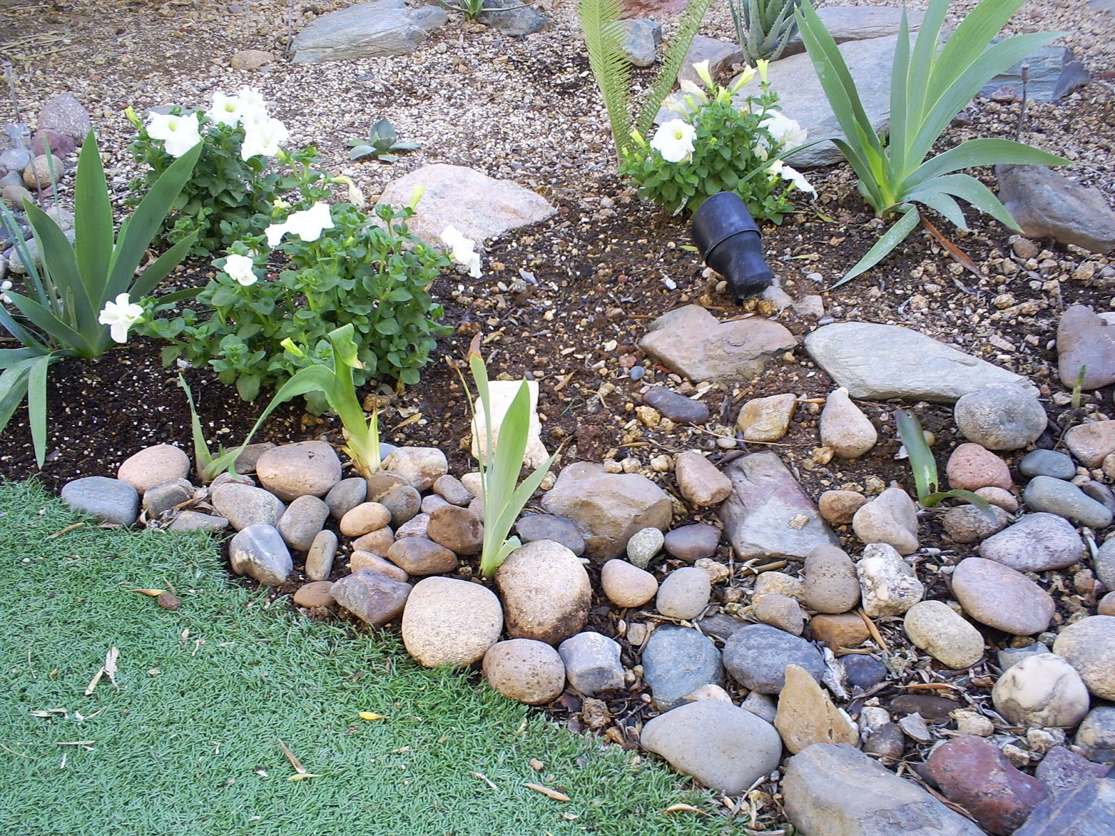 A neat trick for giving some visual interest to an area that has yet to  fill in with plants is to use rocks. In addition to the big, heavy,  permanent rocks ...