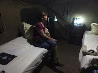 safari, botswana, teltta