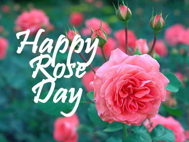 Happy Rose Day 2022 Images, Wallpapers, Pics & Photos