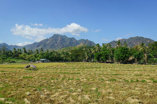 Fields in Oecusse, East Timor land law english translation warren l wright