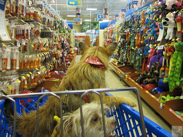 Jada and Bailey in the toy aisle of PetSmart