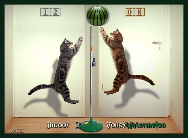 Photoshopped Cat Picture • 12-08. Two cats playing Indoor VolleyWatermelon, more fun than volleyball!