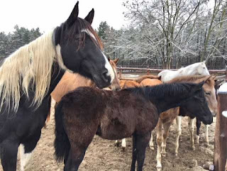 El Bronco ranch, riitta reissaa, horsexplore, Korumies-Arvi