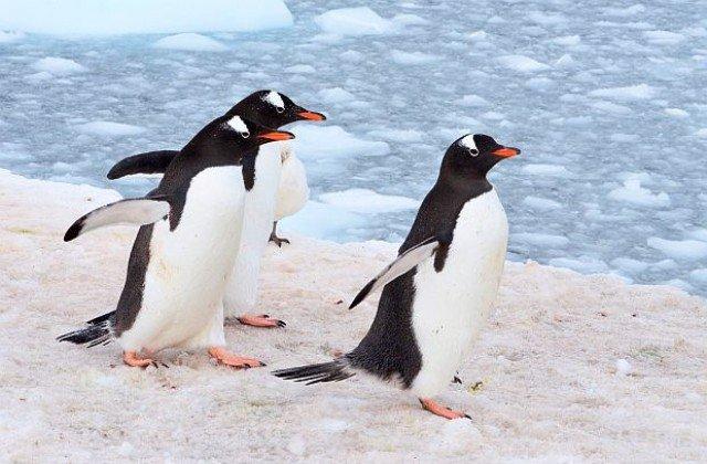 Вчені знайшли останки стародавнього пінгвіна віком 61 млн років