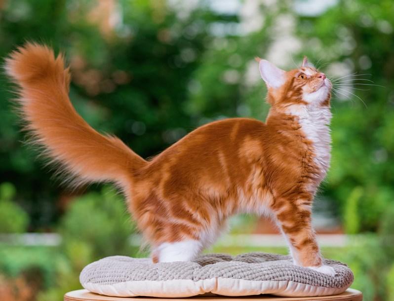 fakta unik tentang kucing hitam  fakta unik kucing dalam islam iwak peyek