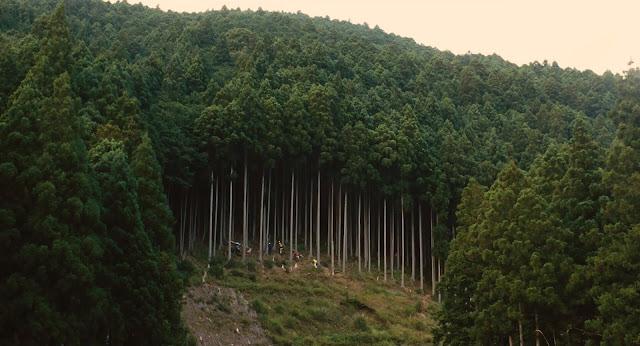 gambar wood job by lemonvie 2