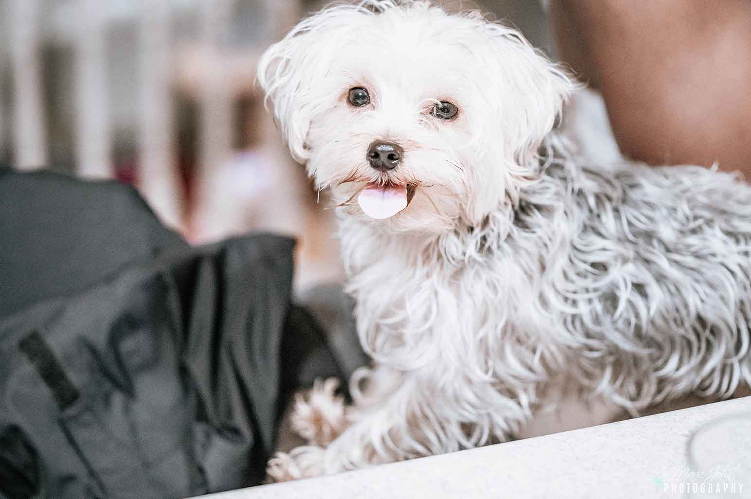 What Is Puppy Anorexia and How Can You Stimulate Your Dog's Appetite