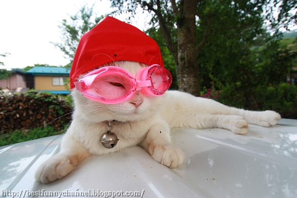 Funny white cat.