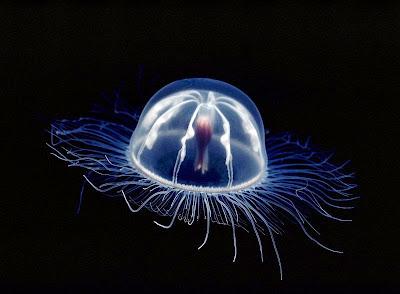 Resultado de imagen de bioluminiscencia