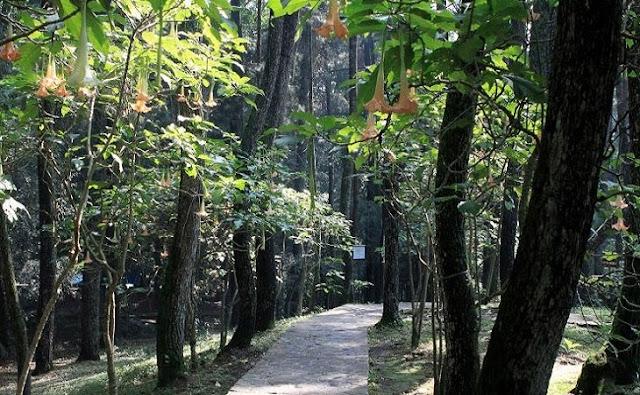 Taman-Hutan-Raya-Sultan-Syarif-Kasim-Provinsi-Riau